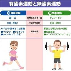 運動 有 酸素